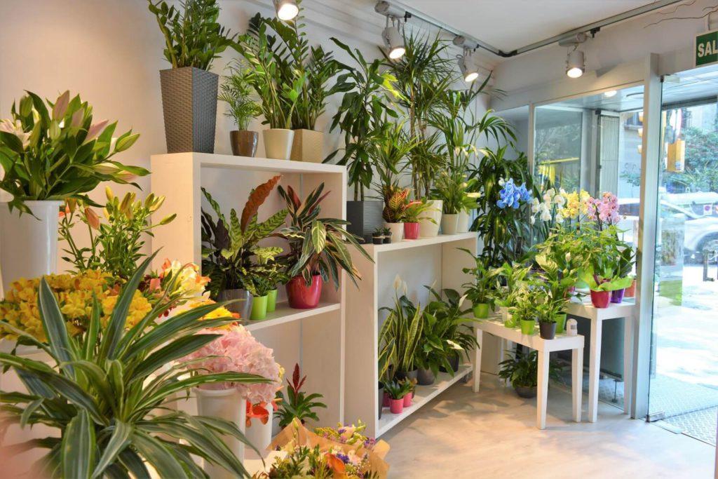 interior tienda fiori